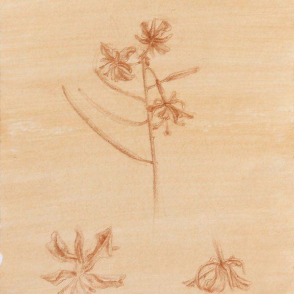 Rysunki kwiatów - Rysunek na gruntownym papierze - Arkadiusz Gieniusz.